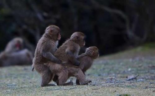 Funny monkey, Monkey Train