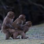 Monkey Train