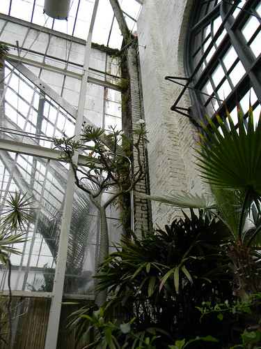 Greenhouse at Biltmore