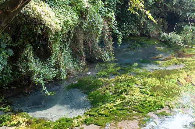 湧水とカイツブリ