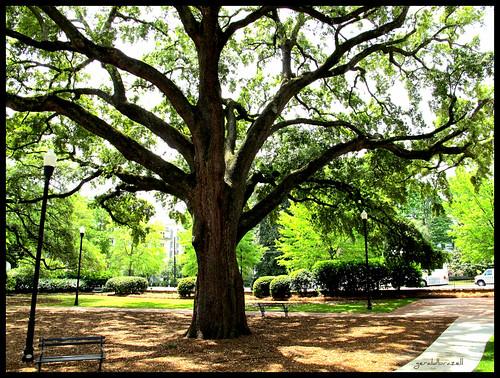 tree sc bench southcarolina columbia greenery columbiasc