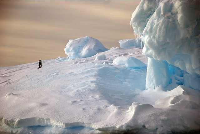 penguin on ice floe Weddell Sea by SummitVoice1 on Flickr