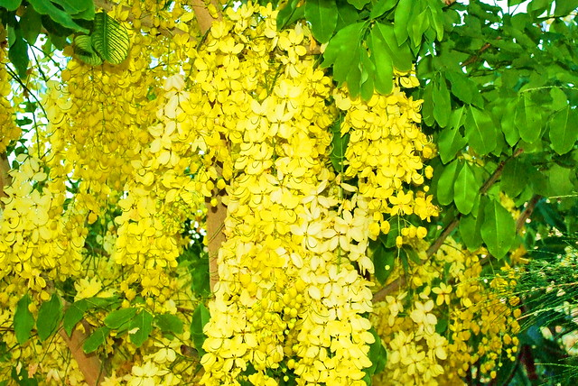 Tropical Flower Names Tropical Yellow Flower