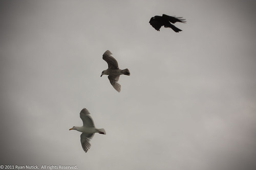 Birds in Flight by the Ferry by tanuki_green