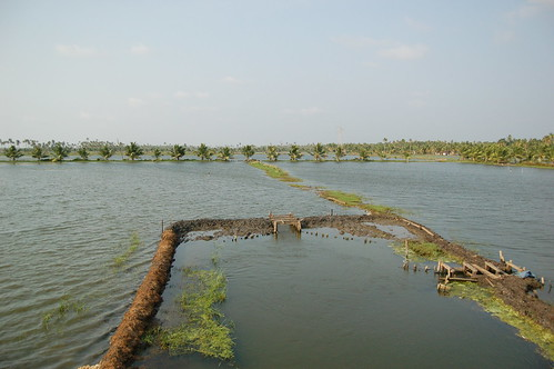 Das Feld mit Brackwasser in der Trockenzeit dient zur Zucht von Garneelen