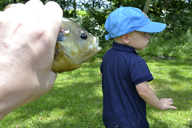 Local Treks: Blue Gill and Kid