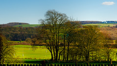 The playing fields at Woodleigh School in spring (1 of 1). By Thomas Tolkien