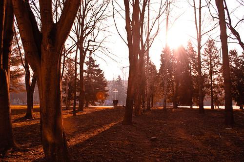street morning trees sunset red sun beautiful