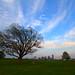 Urban Landscape - Dallas Skyline as seen from Trinity park by Manish Mamtani