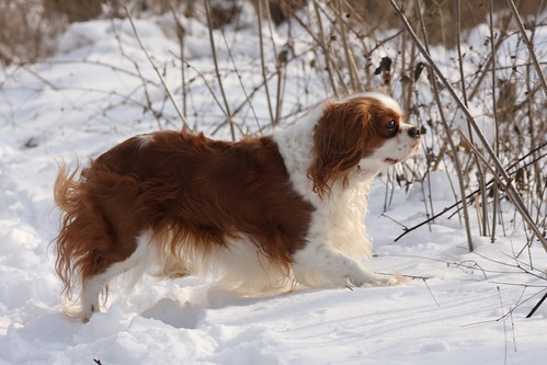 Susie in the snow