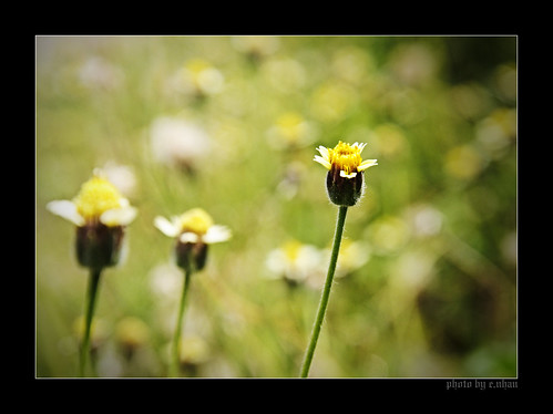flowers light flower art nature leaves yellow closeup landscape colorful colours shadows dof bokeh arts backlighting enhan