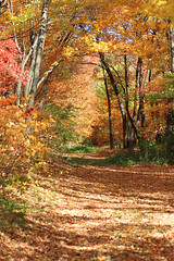 Scenic Beauty / Four Seasons (Kim Hogdal)