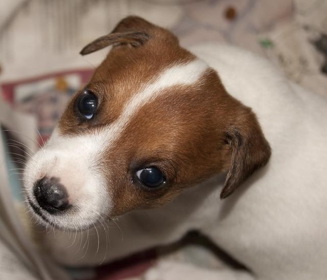 Ternura de cachorro