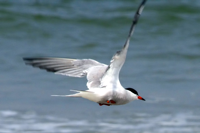 tern wild flight