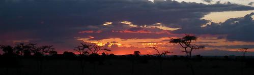 africa sunset nature silhouette kenya laikipia olpejetaconservancy laikipiakenya