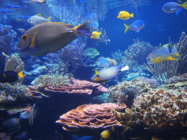 Aquarium Fish Long Island Long Island Aquarium