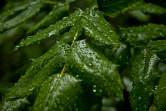 dew, drop, leaf, macro photography, herb, green, moisture, close-up,