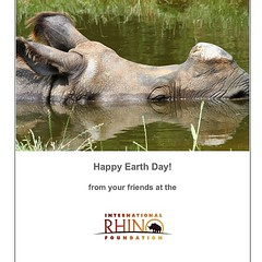 Happy #earthday from IRF! #rhinos