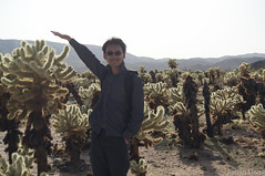 with Jumping Cholla
