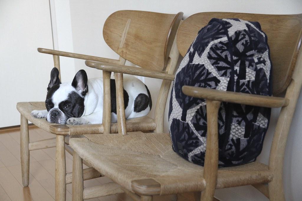 French Bulldog Chikuwa