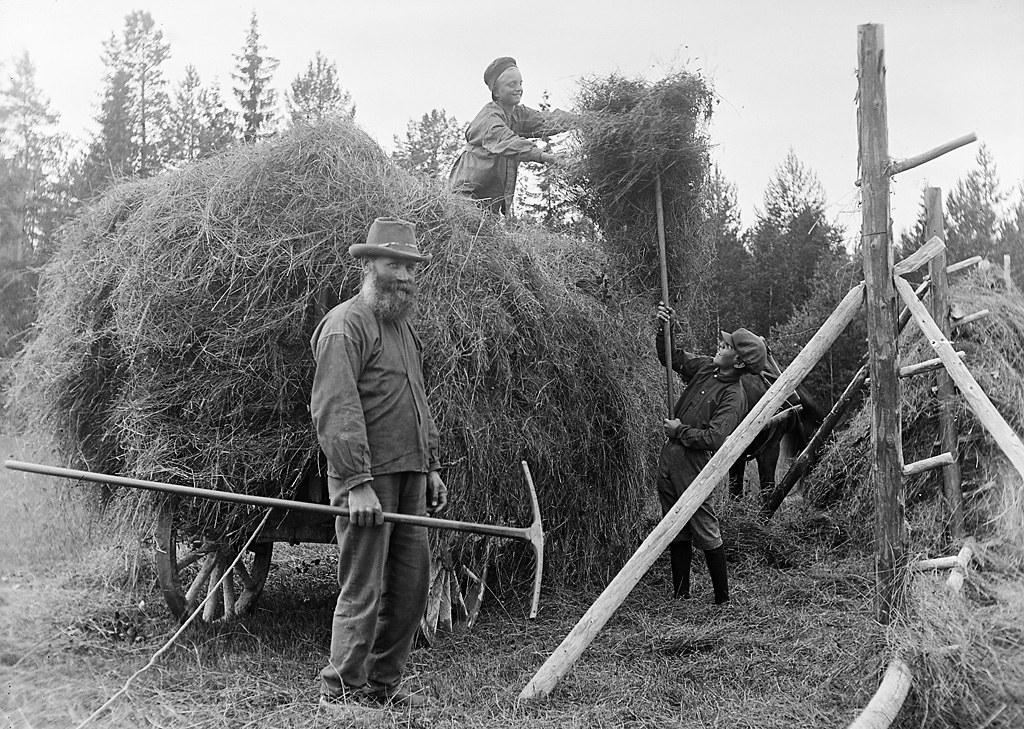 Haymaking, Almo, Dalarna, Sweden