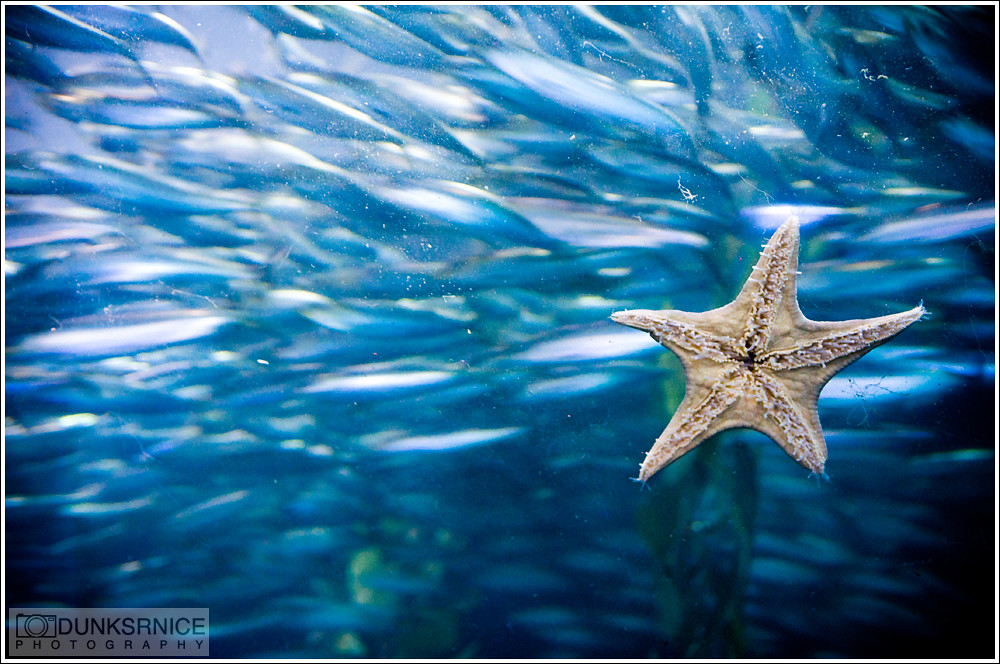 Aquarium of the Bay, San Francisco.