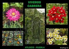 Flickr luis enrique g mez s nchez 39 s photos taken near for Viveros sanchez