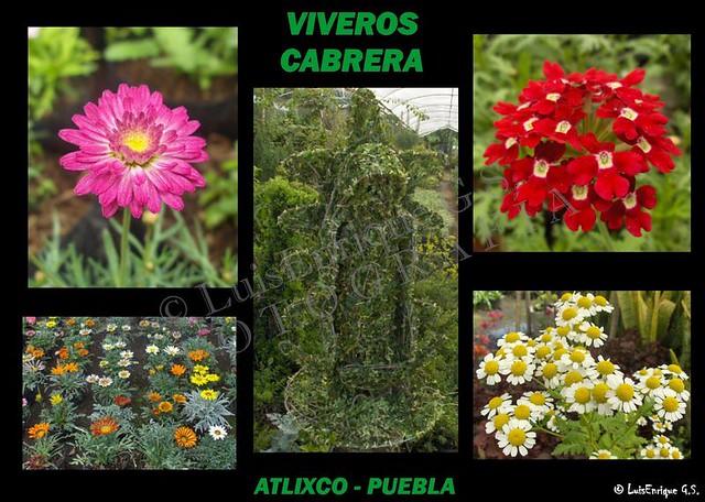 Viveros cabrera atlixco puebla m xico flickr for Viveros de plantas de ornato