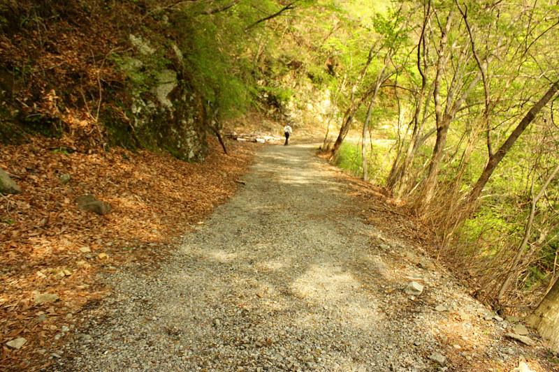 20110429_塔ノ岳(表尾根)_0055