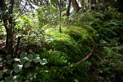 Moss at Hakone - 05