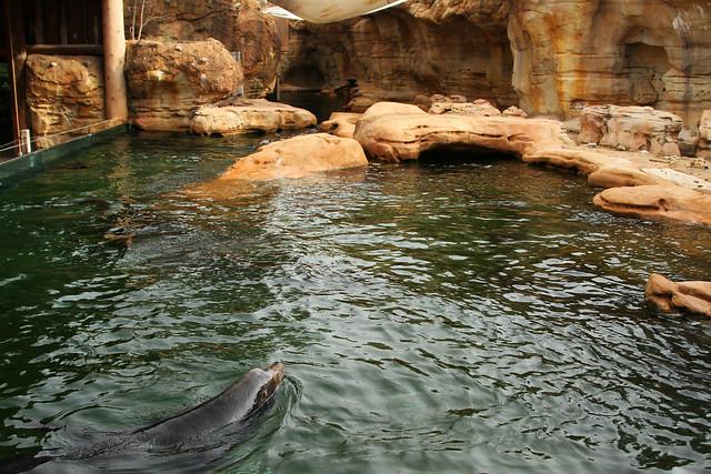 sea lion exhibit