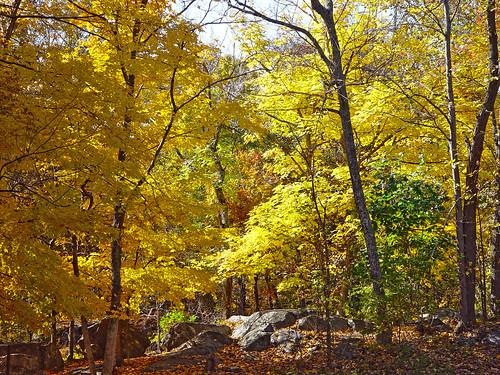 2002 trees virginia