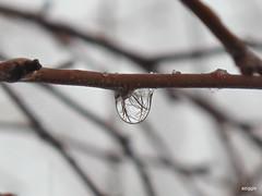 Tree & Water 2