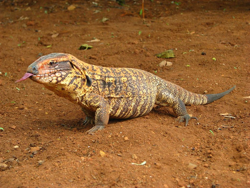 BEYEU-PETVN Chuyên cung cấp thú nhỏ:HAMSTER,GUINEA PIG, RABBIT, HEDGEHOG và vật dụng - 5
