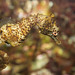 Shorthead Seahorse - Photo (c) Brian Gratwicke, some rights reserved (CC BY)