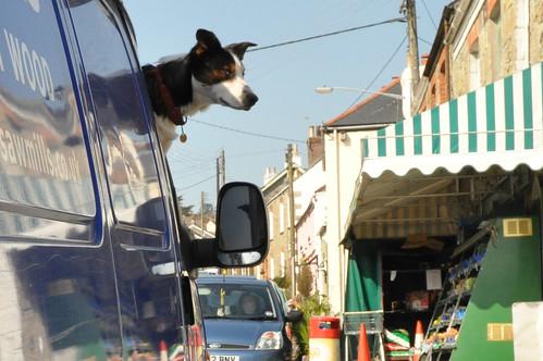 Dog in a Van by https://www.flickr.com/photos/gordonplant/