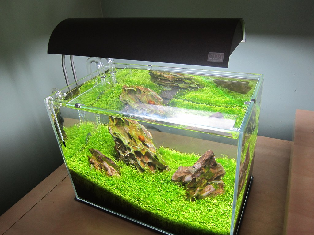 my ada mini m iwagumi planted tank. Black Bedroom Furniture Sets. Home Design Ideas
