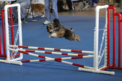 On the Run Canine Center (Kim Hogdal)