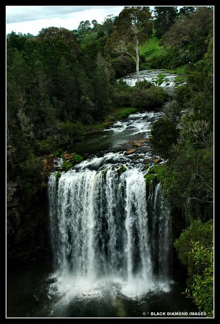 Dangar Falls - Dorrigo, NSW 16.2.2008