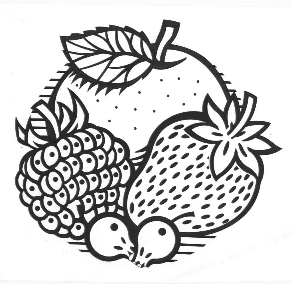 Line Drawing Fruit : Line drawing illustrations steve sharpesteve sharpe