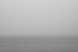 Mist on Markermeer