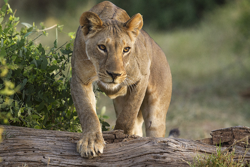 Sumburu  Kenya