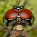 Anisoptera [ Dragonfly ] - [ E X P L O R E D Frontpage ] by Glen Espinosa Photography