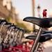 Week 2:52 - El Lorito en la ciudad - En el Bicing by Irene Ruscalleda