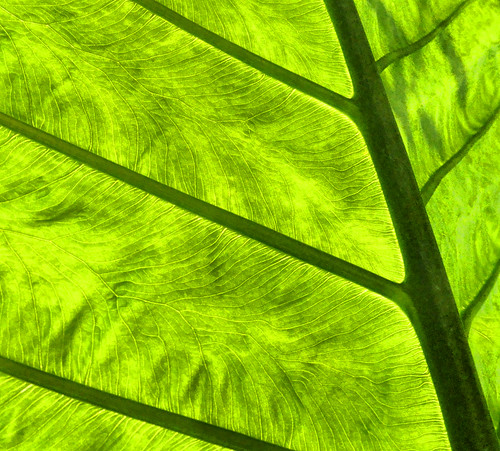 toronto leaf allangardens april2011
