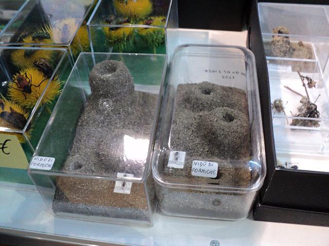 Vendita formiche trattamento marmo cucina - Formiche in cucina ...