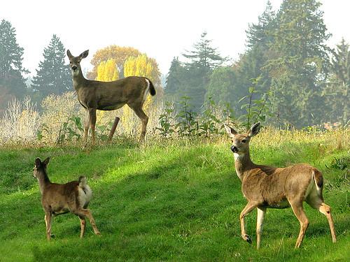deer biotic terrestrialecosystem tertiaryconsumer biol1210sp211o
