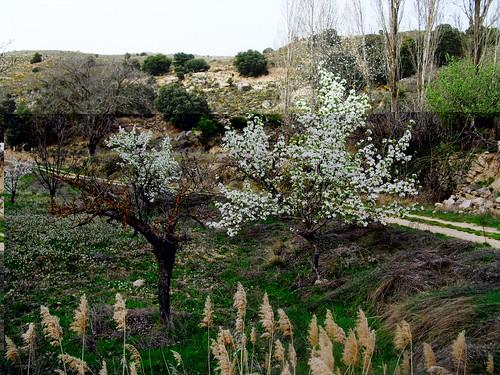 Primavera 2011 por Cañaveras, Cuenca.