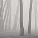 Trees in Fog, Cherry Beach by Peter Bowers