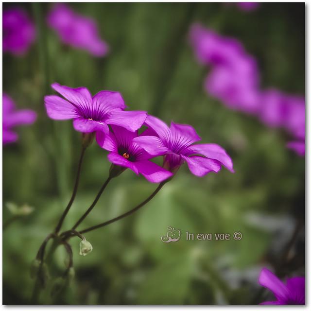 E' tanto tempo che non regalo un fiore alla Titti : )
